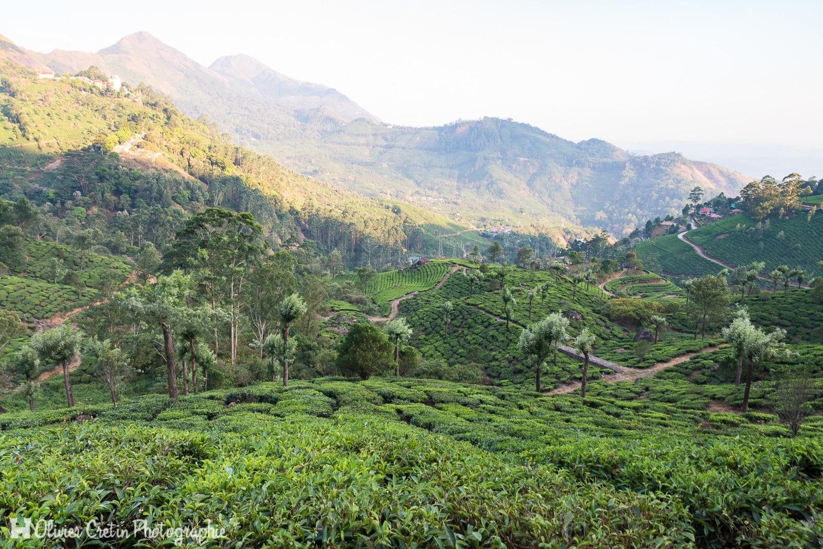 Inde - Munnar - L\'heure du thé