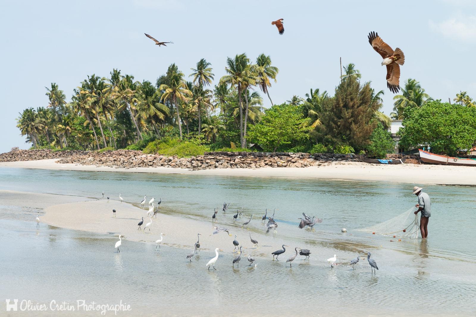 Inde - Entre Marari beach et Kochi - Un autre retour de la pêche