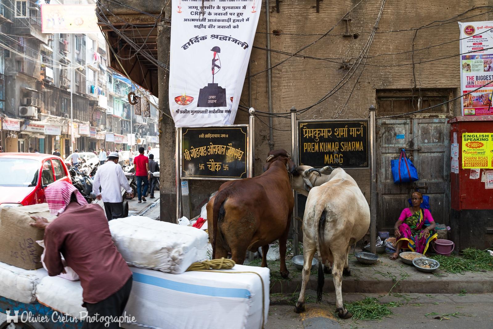 Inde - Mumbai - Scène champêtre de rue